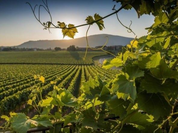 villa s vinigradnikom pod rimom 1 – Современная вилла с виноградником