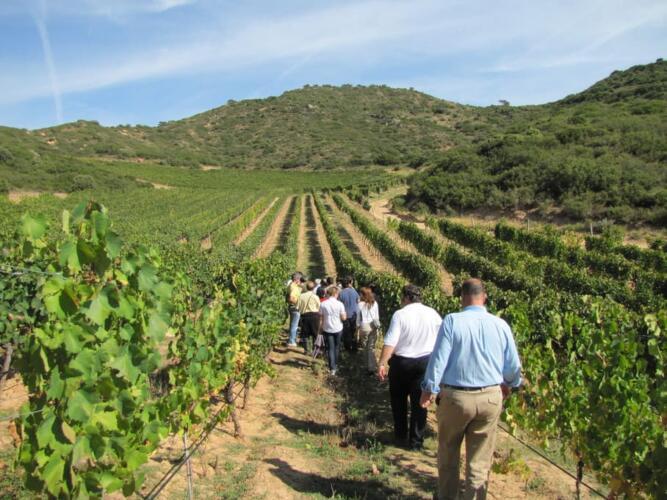 vinogradnik v italii 4 – Вилла для отдыха в Порто-Черво