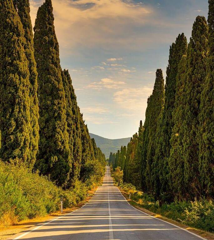 Дом с виноградниками в Болгери | Недвижимость Италии